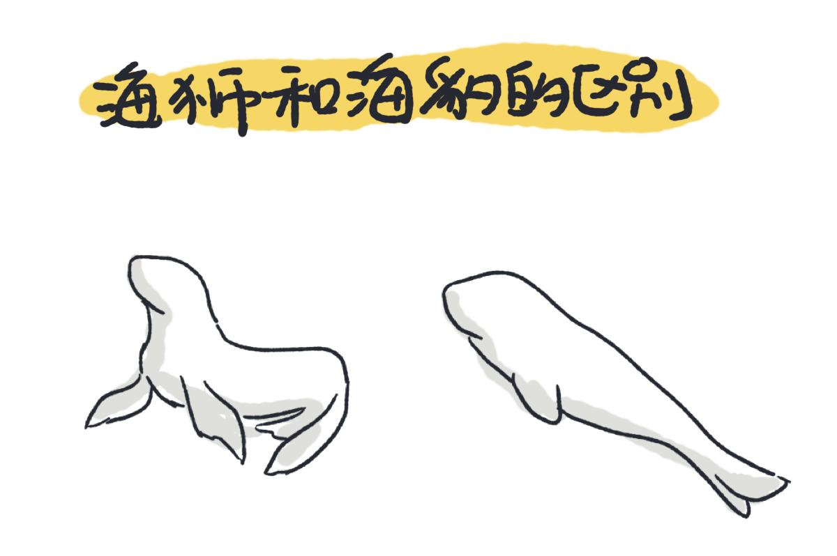 海狮和海豹的区别