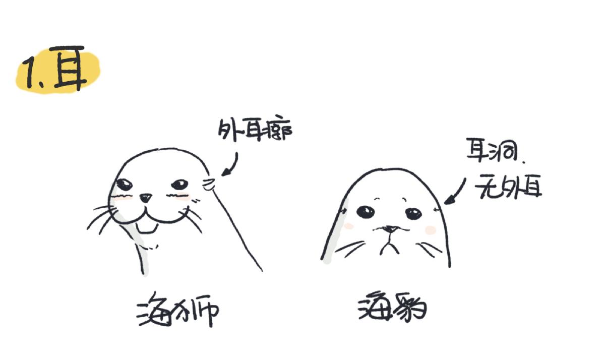 海狮有外耳廓,海豹只有耳洞
