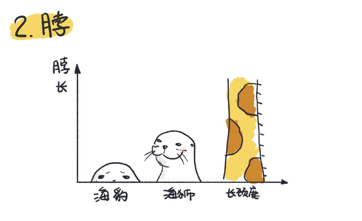 海狮的颈部长于海豹,更灵活