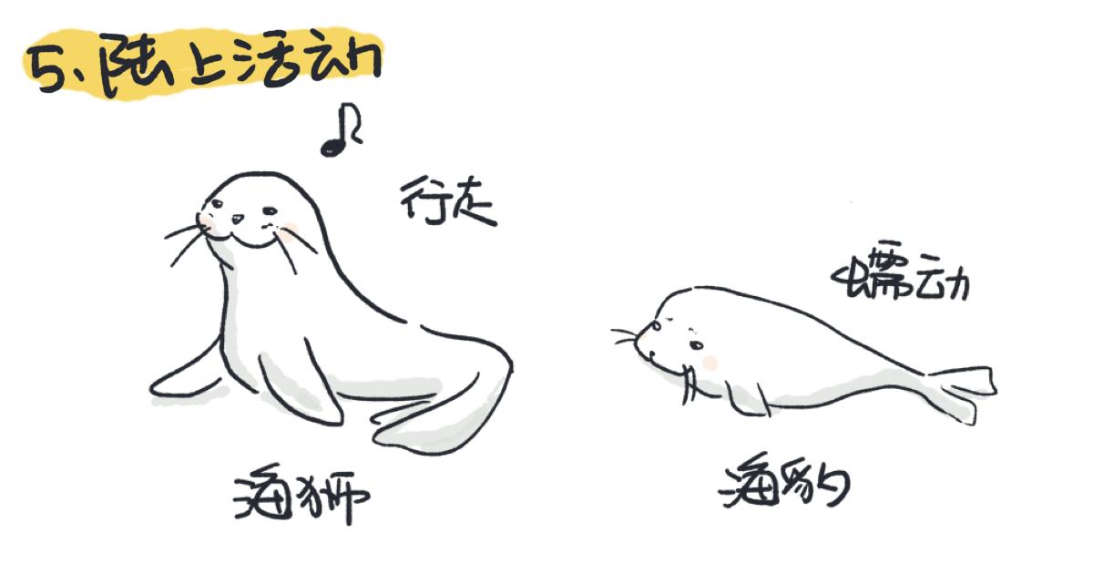 海狮在陆上是行走的,海豹只可以用腹部在地面上蠕动